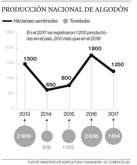 En Tosagua sobreviven los últimos algodoneros