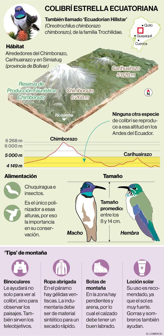 Un colibrí despierta el interés turístico en la Reserva de Producción Fauna Chimborazo
