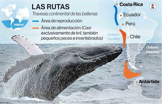 Las rutas que recorren las ballenas