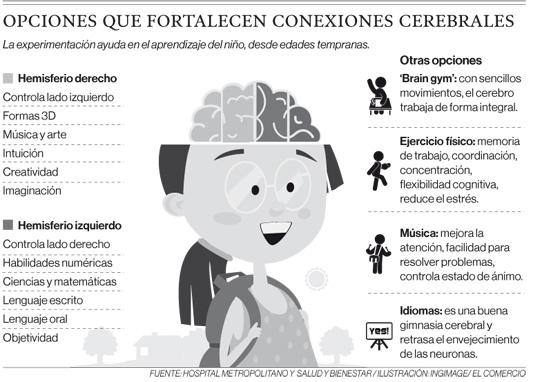 Opciones que fortalecen conexiones cerebrales