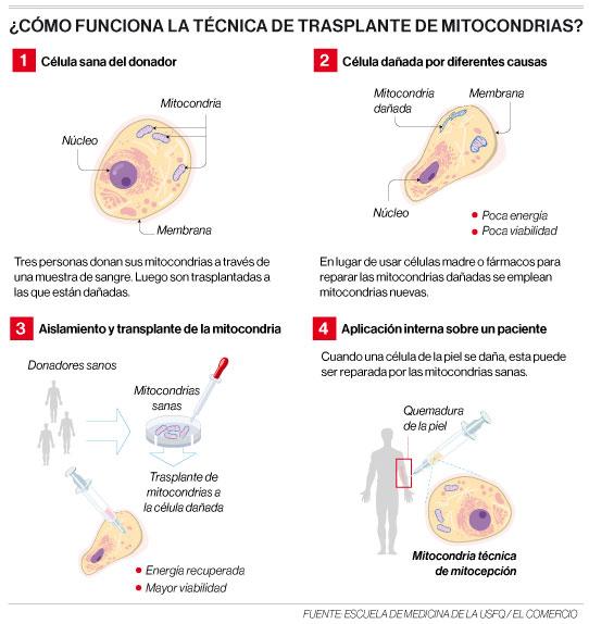 Infografía del funcionamiento de la técnica de transplante de mitocondrias