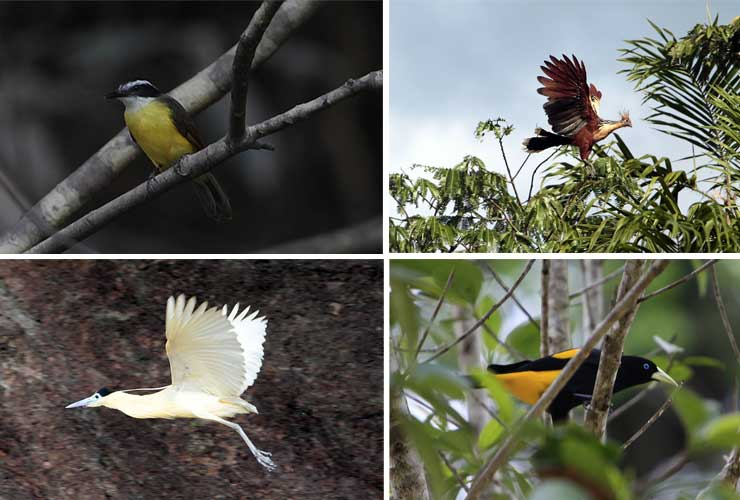 Biodiversidad en el Yasuní