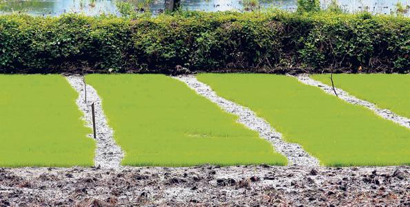 Alfombras de verde