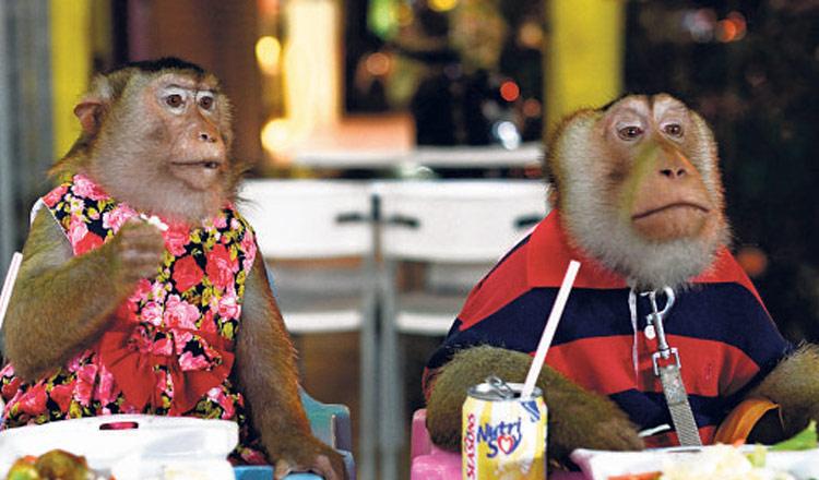 Uso de monos