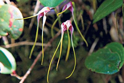 Una flora variada