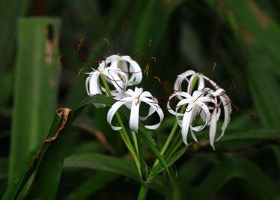 Variedad de flora y fauna