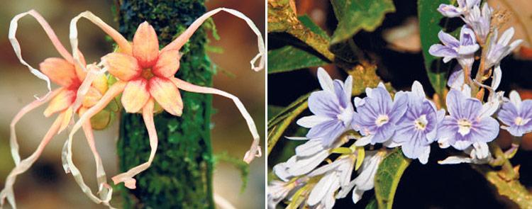 Biodiversidad Yasuní