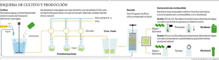 Elaboración de biodiésel