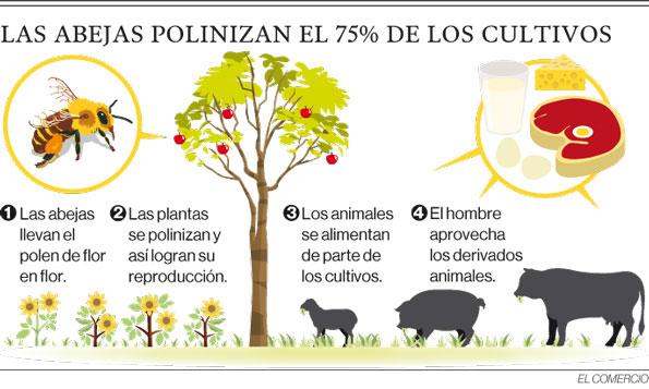 Image: El Medio Ambiente en el Mundo: Disminución de Abejas