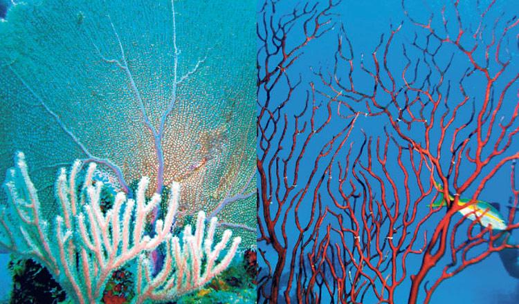 Riqueza en el océano