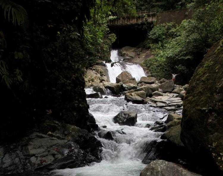 La fuente del bosque