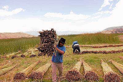 El día de la cosecha en Yahuarcocha