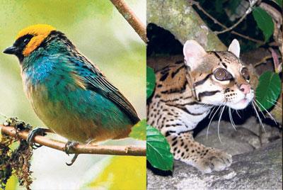 Hábitat ideal para mamíferos y aves