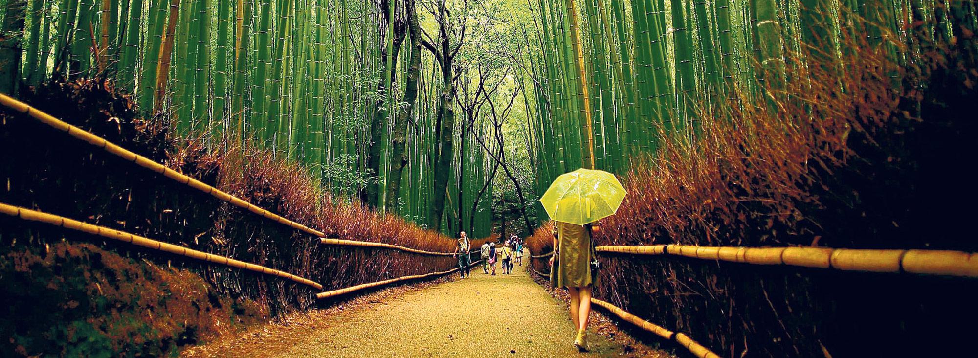 Bambú África