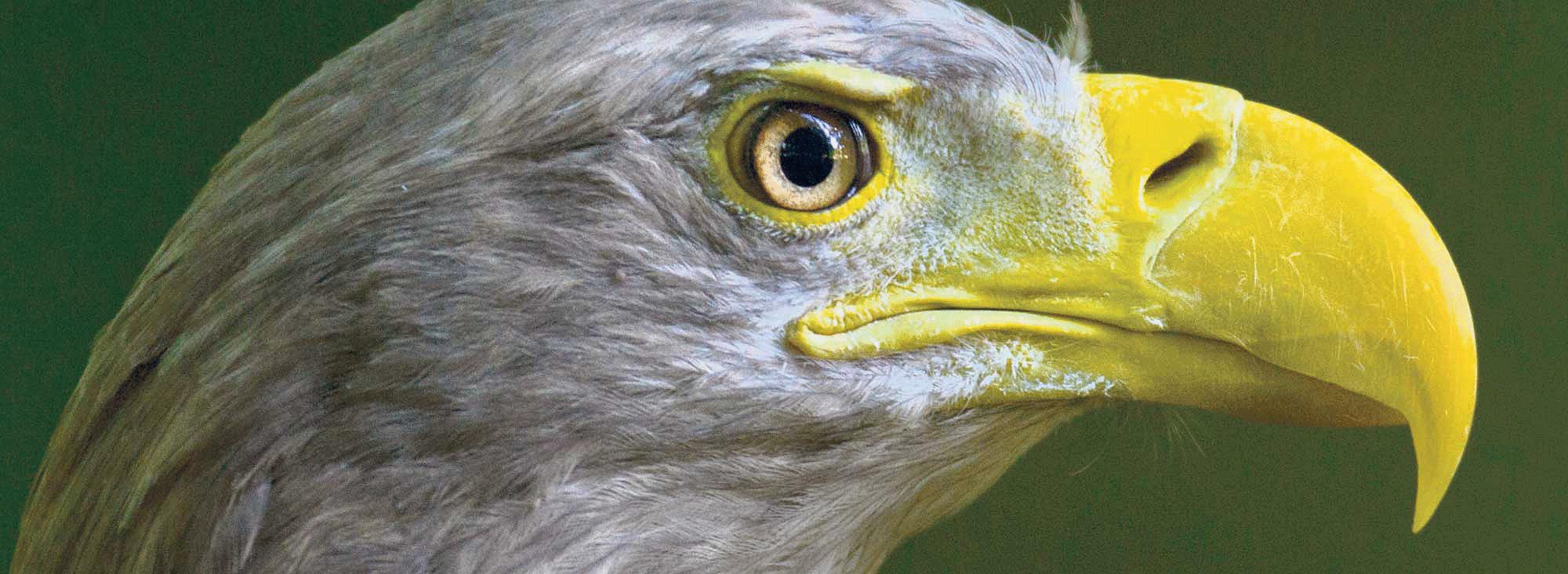 Aves cambio