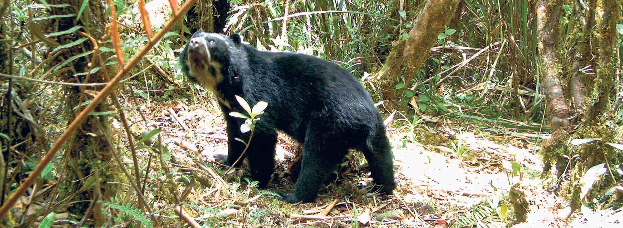 Conservación Reserva Sangay