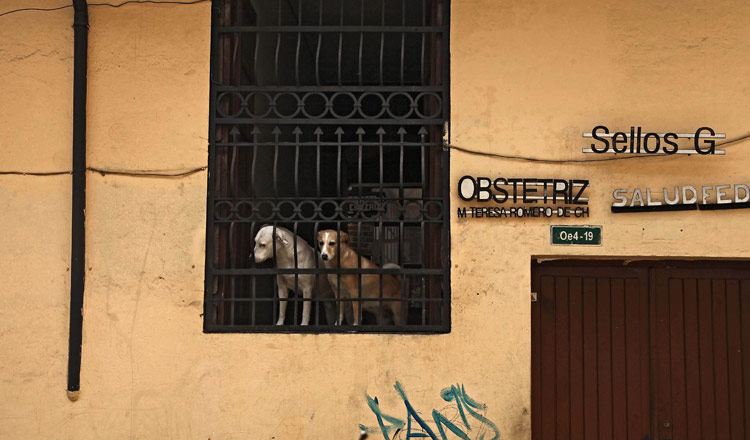 Canes de balcón