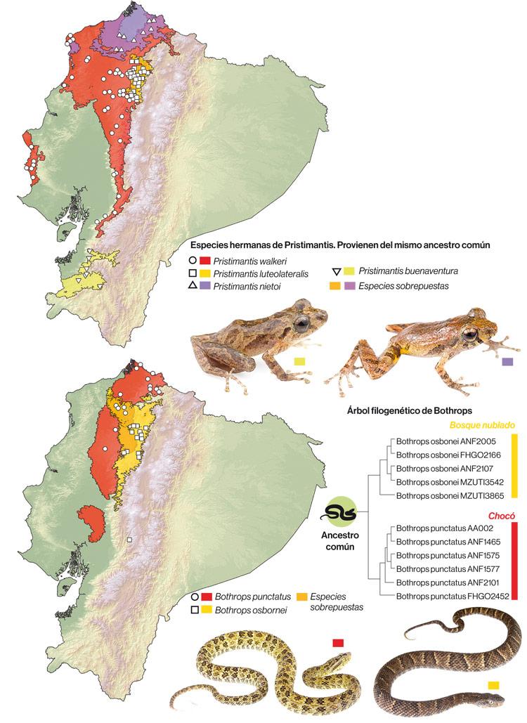 Mapas de distribución