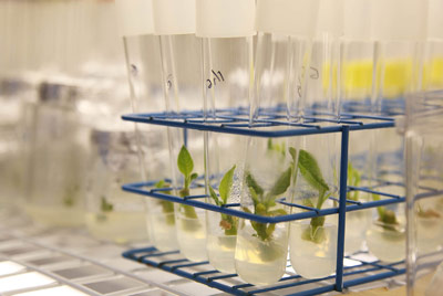 Laboratorio in vitro