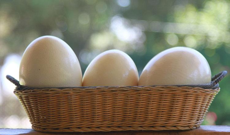 Huevos de avestruz