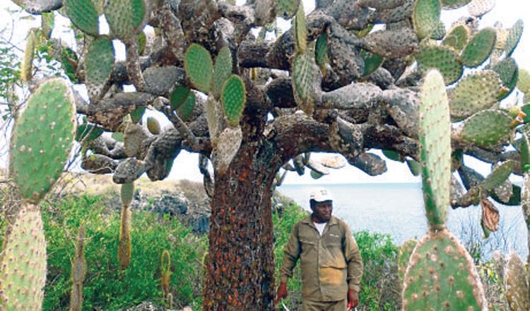 En gal pagos 50 especies de rboles son patrimonio for Las caracteristicas de los arboles