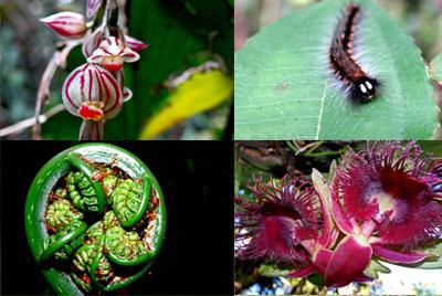 Flora y fauna variada