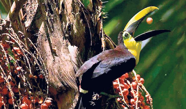 156 especies de aves