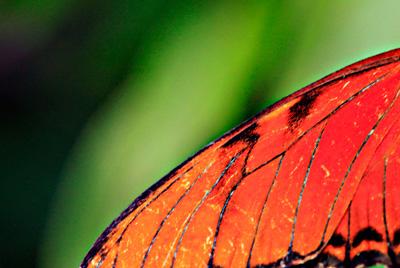 Ala de una mariposa
