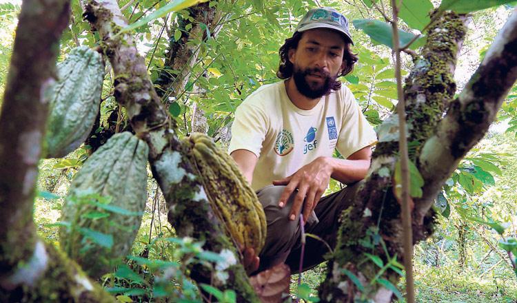 cacao libre de químicos