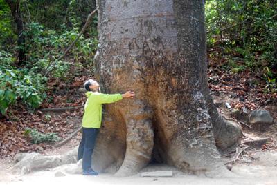 Los árboles gigantes.