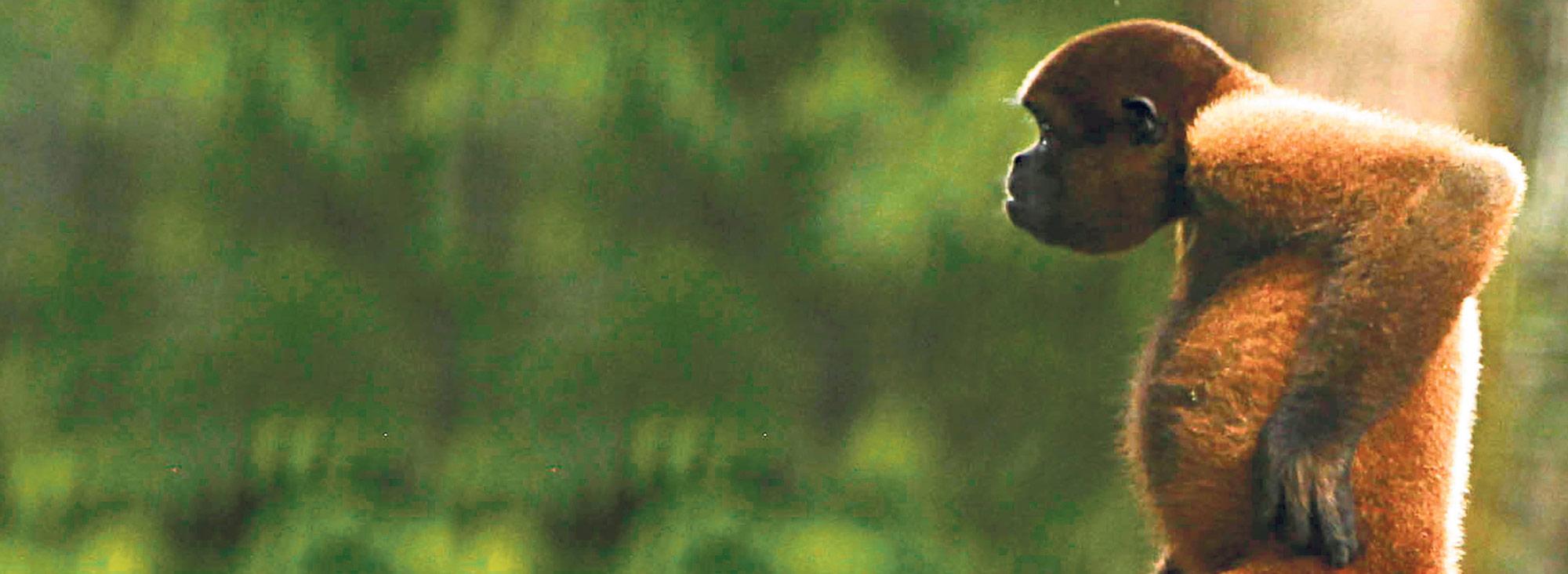 Primates- Planeta junio
