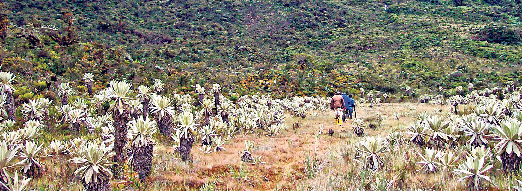 Reserva Sabia Esperanza
