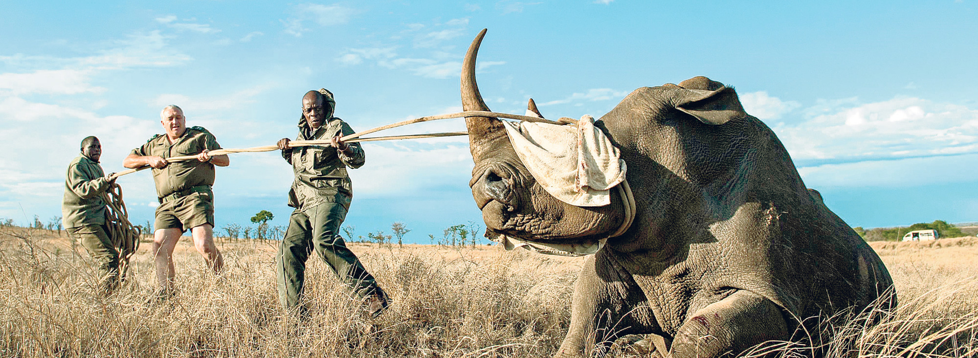 Rinoceronte191014