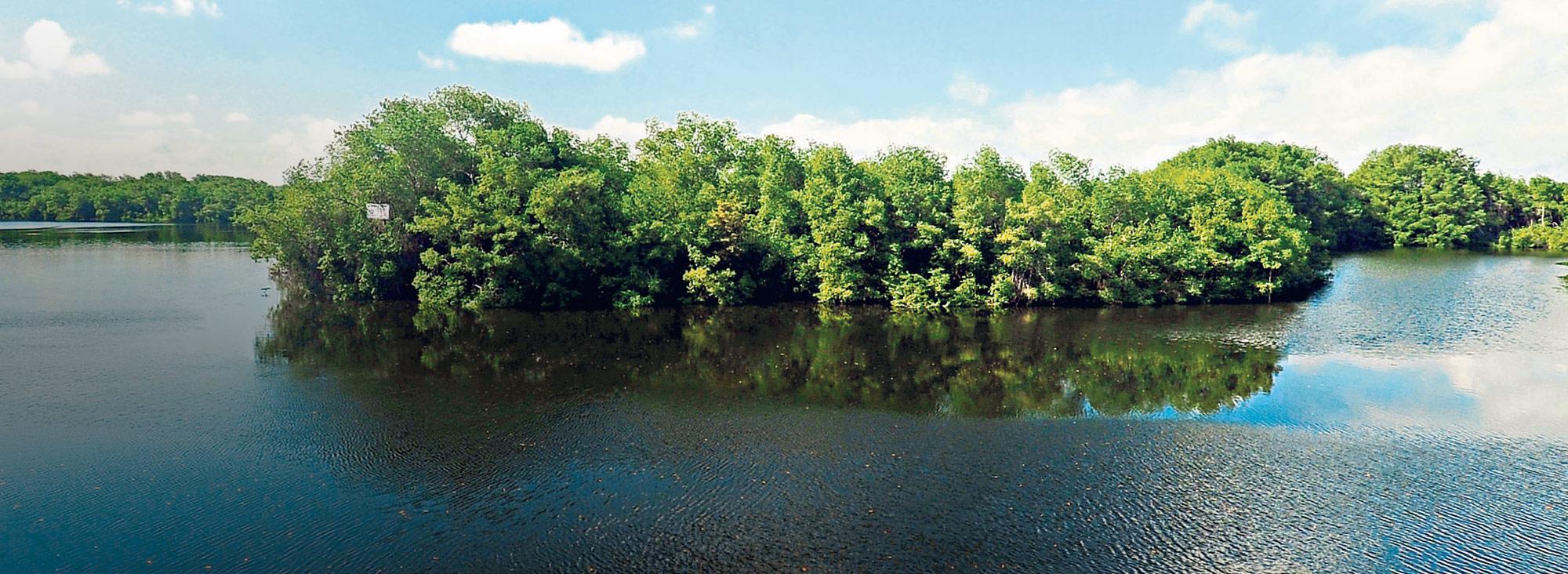manglares, una barrera