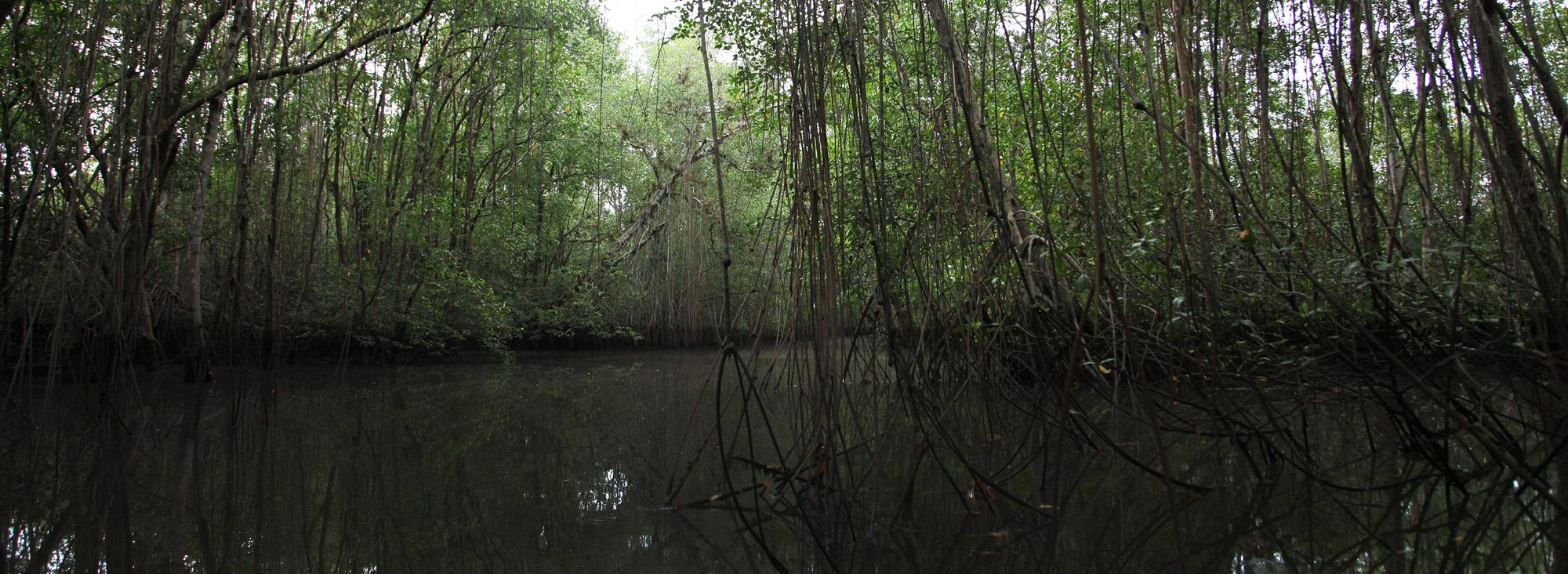 manglares 1