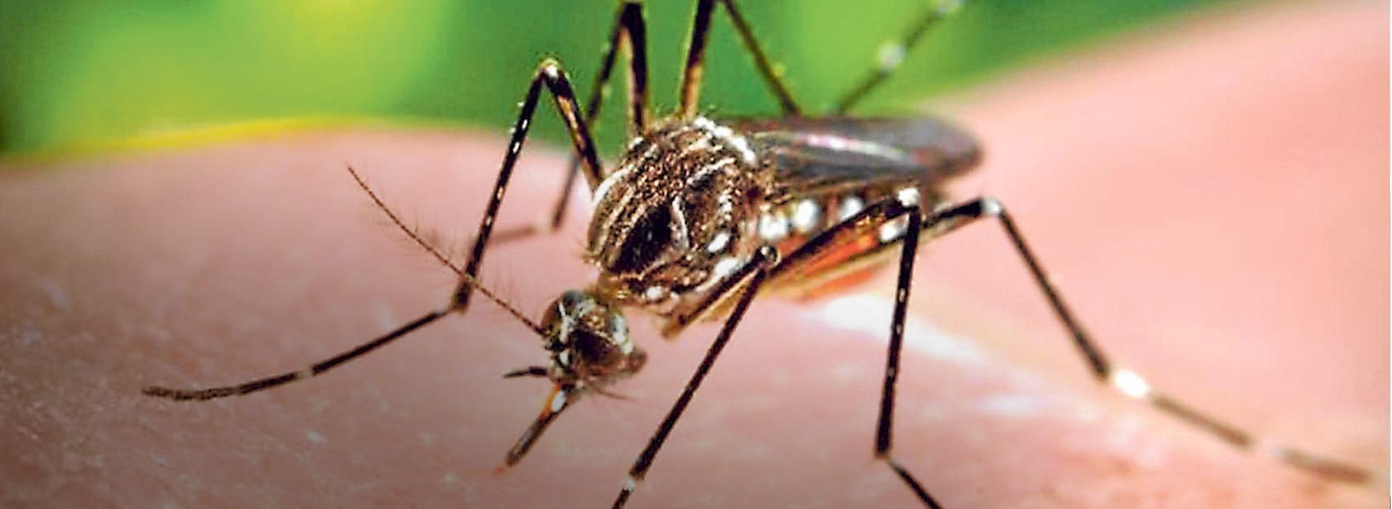 Slider zika