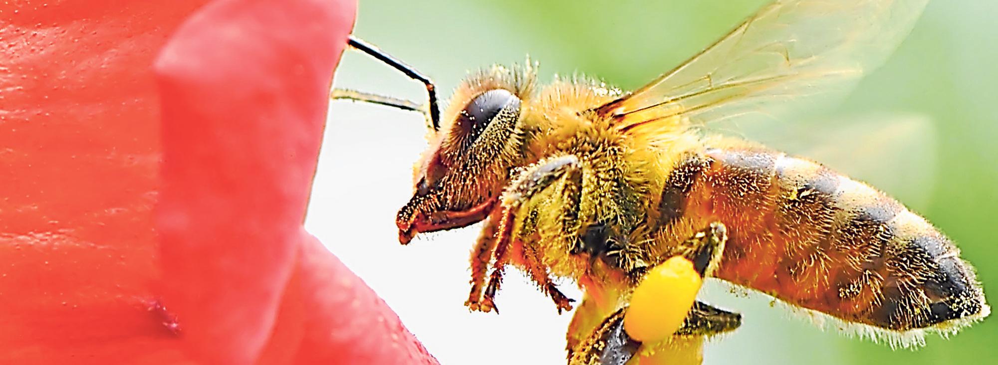 Slider abejas