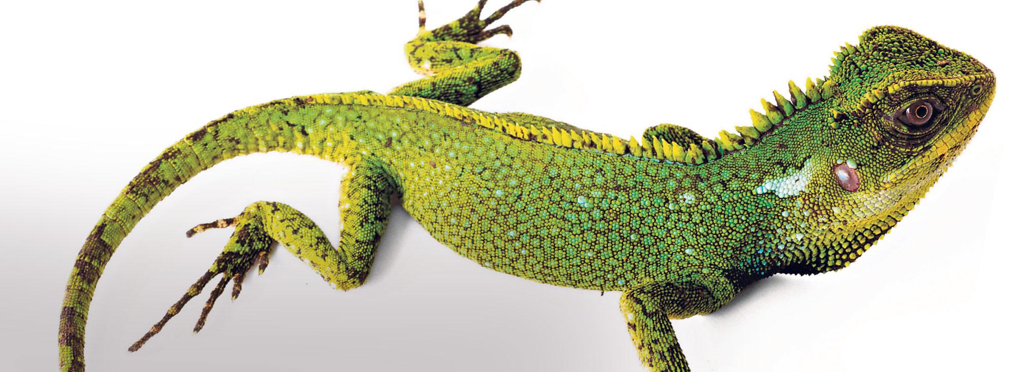 lagartos slider
